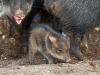 Új családtagok az állatkertben