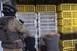 Bíróság elé állnak a mohácsi kutyaviadal szervezői és a véres összecsapás bírája