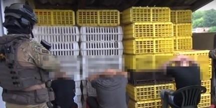 Kutyaviadal Mohácson: letöltendő börtönbüntetésre ítélték a szervezőket