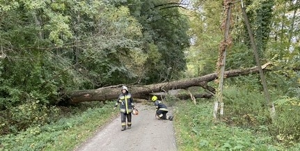 Hatalmas, kidőlt fa zárta el az utat Kölkednél