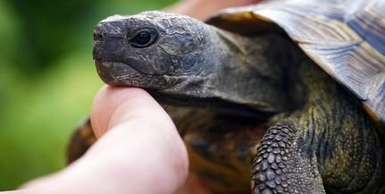 A talajnedvesség is befolyásolhatja a teknősök nemét