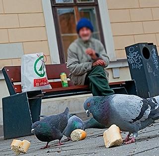 Továbbra sem tudják türtőztetni magukat a pécsi Lajcsisimogatók, etetik a galambokat