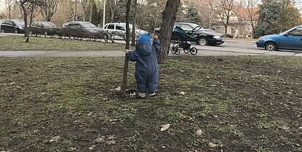 Tavasszal tovább zöldül Pécs, több száz új facsemetét ültetnek el szerte a városban