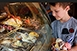 Csavart vagy gombóc? Az örök klasszikusok mellett újdonságokat is kínálnak a pécsi fagyiárusok