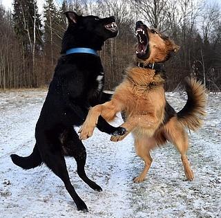 Nagytestű kutyák támadtak meg egy gyereket szombat délután Kozármislenyben
