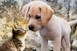 Harmóniában élnek egymással a kutyák és a cicák