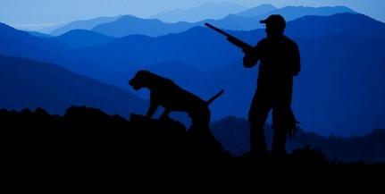 Megadták a kilövési engedélyt, Pécsen belül is levadászhatják a vaddisznókat