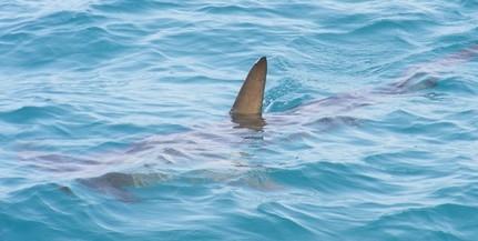 Azt állítja egy turista, hogy cápát látott az Adriában, Montenegró partjainál