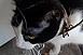 Állati kegyetlenség: egy viskóban tartottak láncon kutyákat és macskákat Pellérden