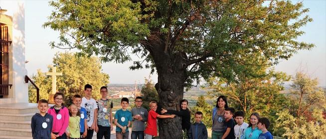 A Pécsi havi-hegyi mandulafa az Év Fája, különdíjas a szebényi Nagy Fa