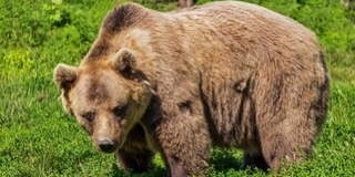 Rájuk támadt a medve, baltával verték agyon