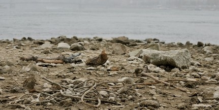 Áll a hajóforgalom a Dunán, súlyos károkat okoz a továbbra is kritikusan alacsony vízállás