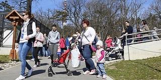 A felújítása óta már csaknem félmillióan váltottak jegyet a Pécsi Állatkertbe