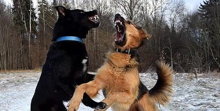Több embert is póráz nélkül sétáltatott kutya harapott meg a napokban Kertvárosban
