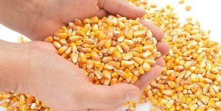Vádat emeltek a kukoricás baranyai csalók ellen
