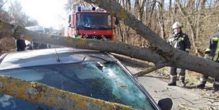 Fákat döntött ki, tetőket bontott meg Baranyában a viharos erejű szél