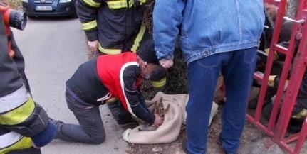 Kerítésbe szorult őzet szabadítottak ki a tűzoltók Pécsett