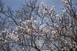A hétvégén is marad az enyhe, tavaszias időjárás