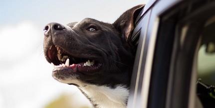 Visszavitték a kutyáját, rátámadt a gyepmesterekre