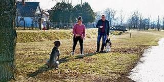 Teljesen megújulhat a Béke park: kutyafuttató és játszótér építése szerepel a tervek között