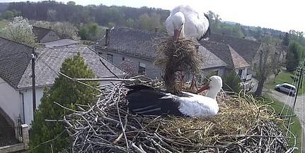Új párt hozott az elárvult drávaszentesi gólya