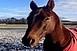 Elszabadult lovak miatt lezárták az M7-es autópályát