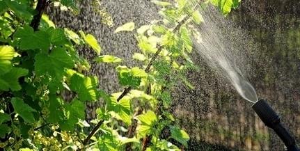Éjjelente támadja csütörtöktől a gyomnövényeket a Biokom