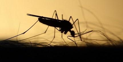 A katasztrófavédők idén nem pusztítják Pécsett a szúnyogokat, a város cége viszont lép