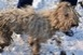 Csaknem éhen veszejtette a kutyáját egy komlói asszony