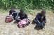 Három migráns került elő a kukoricásból Sátorhelynél