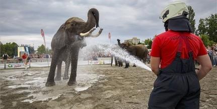 Elefántokat fürdettek a tűzoltók Balatonlellén