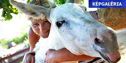 Találtunk egy igazi csodafarmot Pécs-Patacson, fantasztikus állatokkal - Képgaléria, videó!