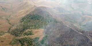 Rohamosan pusztul a világ tüdeje, az Amazonas