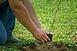 Több mint 150 ezer fával zöldülhet Pécs egy remek kezdeményezésnek köszönhetően