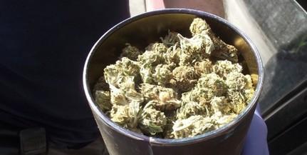 Igazoltatáskor bukott le egy baranyai drogdíler - Egy vödörnyi fű volt nála