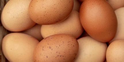 Ötven tojást akart megenni egy férfi fogadásból, belehalt