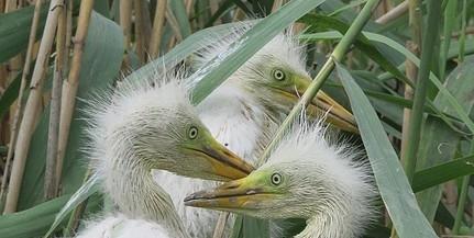 Vizes élőhelyek újulnak meg a Mohácsi-szigeten