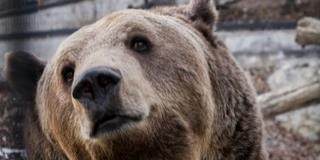Tízéves Nikoláj, a pécsi állatkert egyik legnépszerűbb lakója