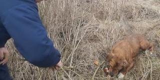 Tíz méter mély kútból menekítettek ki egy kutyát - Videó!