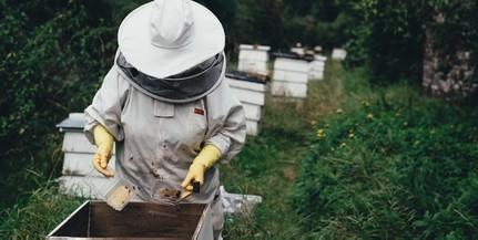 Duplájára emeli a méhészek támogatását a kormány