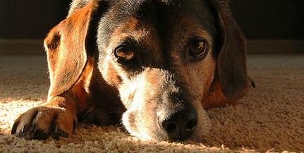 Bérgyilkossal végeztette ki kutyáját egy baranyai nő