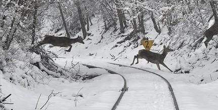 Visszatért a tél, szerdáig akár komolyabb hóréteg is összegyűlhet Baranyában