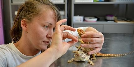 Hüllőket gyógyít Gajcsi Dóra állatorvos, de kényszerből néha embereket is kezelésbe vesz