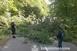 Kidőlt fa zárta el az utat Orfű és Pécs között