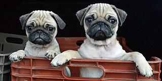 Olvasói levél: nagyon pörög a pécsi vásár, de vajon miért tűntek el a kutyák?