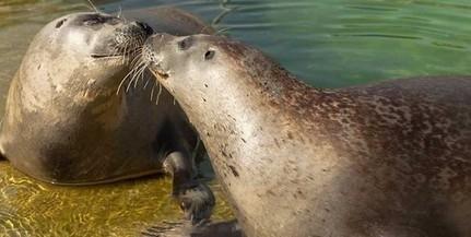 A látogatókkal közösen ünnepli az állatkert megnyitásának hatvanadik évfordulóját