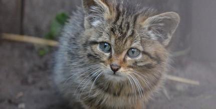 Tizenkét év után került elő egy eltűnt macska