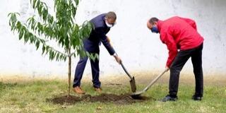 Faültetéssel üzentek az utókornak a Pécsi Hittudományi Főiskolán