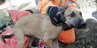 Huszonhárom méter mély kútból mentettek ki szombaton egy kiskutyát Pécsett