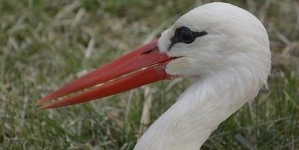Idén a tavalyinál több gólyapár fészkelt Baranyában